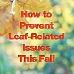How to Prevent Leaf-Related Issues This Fall